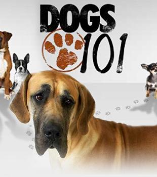Podľa mňa sú najlepšie Dogs 101 a Cats 101.